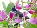 Flower Lover (5301773556).jpg