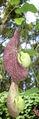 Flower dsc00191.jpg