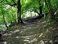 Footpath in Calderglen - geograph.org.uk - 919404.jpg