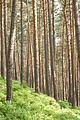 Forêt vosgienne près d'Obernai, Bas-Rhin.jpg