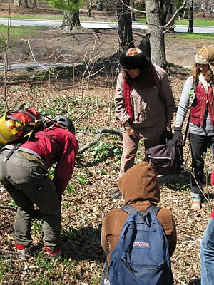 Freeganism - Freegans foraging for wild food in a New York City park.