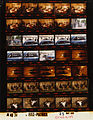 Ford A4874 NLGRF photo contact sheet (1975-05-29)(Gerald Ford Library).jpg