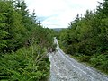 Forest Track - geograph.org.uk - 524441.jpg