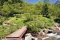 Forest in Yatsugatake 18.jpg