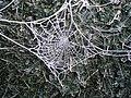 FrostyCobweb.JPG