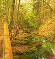 Fundy National Park (34614781803).jpg