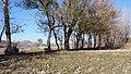 GREEN BAGAN KURRAM AGENCY PHOTOGRAPHER BY UMAR MUNIR ORAKZAI786 .jpg