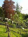 Garden with apple blossoms.jpg