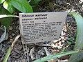Gardenology.org-IMG 0625 rbgs10dec.jpg