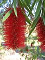 Gardenology.org-IMG 0952 hunt07mar.jpg