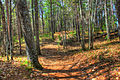 Gfp-michigan-mclain-state-park-the-forest-path.jpg