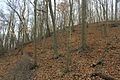 Gfp-missouri-castlewood-state-park-forest.jpg