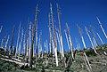 Gifford Pinchot National Forest, Mt St Helens NVM-5 (36338783874).jpg