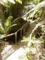 Glendurgan Bamboo.jpg
