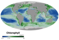Global ocean chlorophyll concentration October 2019.png