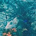 Glover's Reef 2-14 (33297541135).jpg