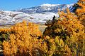 Gold Cottonwoods, Dunes and Snow (15587822042).jpg