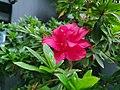 Gorgeous red flower.jpg