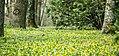 Gradina Botanica (8704942613).jpg