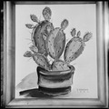 Granada Relocation Center, Amache, Colorado. Water color painting of cactus by S. Kawashiri. - NARA - 539916.tif