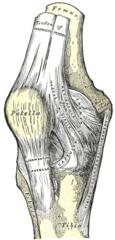Højre knæled, forside.