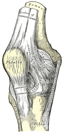 гомеопатическое средство для суставов