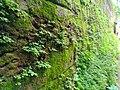 Green Plants Wall.jpg
