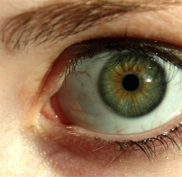 Natural Brown Eye Liner