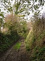 Green lane to Spriddlestone - geograph.org.uk - 279502.jpg
