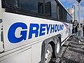 Greyhound (5433957173).jpg
