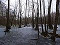 Großer Rohrpfuhl in winter.jpg