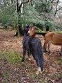 Grooming ponies - geograph.org.uk - 307043.jpg