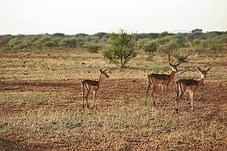 Madikwe Game Reserve game reserve