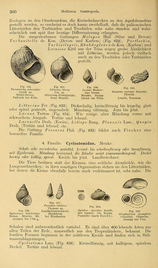 Besondere Len file grundzüge der paläontologie page 360 bhl14393828 jpg