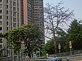 HK 天后 Tin Hau Temple Road Fortress Hill Road view LS Le Sommet trees April-2014.JPG