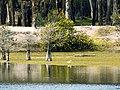 Habitante del Parque F. D. Roosvelt.jpg