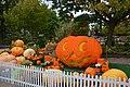 Halloween Græskar.jpg