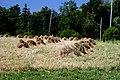 Hay Stooking at Oak Lake 8637 (9349972177).jpg
