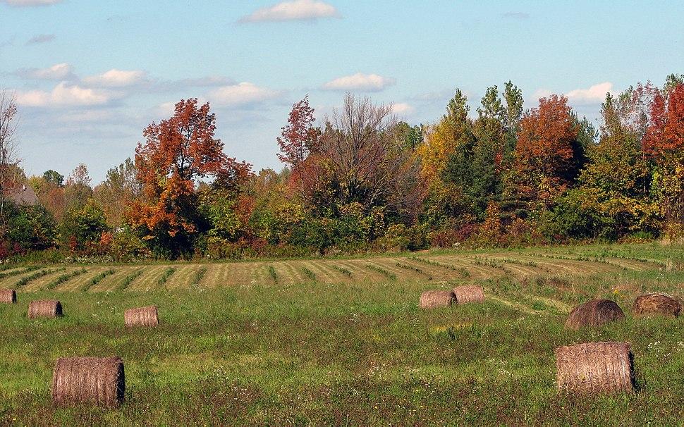 Hayfield in fall