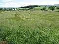 Hayfield ripe for mowing - geograph.org.uk - 1405595.jpg