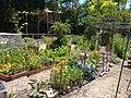 Heritage Park, Mountain View, California, volunteer garden, June 2019.jpg