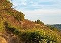 Hessigheim - Felsengärten - Blick vom nördlichen Teil zurück auf Kletterfelsen und Trockenwiese.jpg