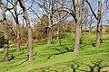 High Park, Toronto DSC 0236 (17207384009).jpg