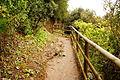 Hiking path Cinque Terre.JPG