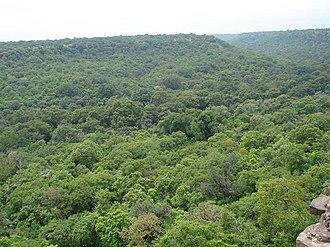 Flora of Madhya Pradesh - View of Mixed forests around Hinglajgarh in Madhya Pradesh