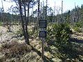 Hinterzartener Moor 1130105.jpg