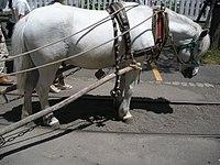 Hokkaido Pony.jpg