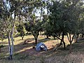 Homeless tent between highway and rail line in Campbell, California.jpg