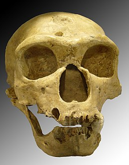 Neanderthal skull at لا شاپیل-آ-سینس