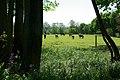 Horses grazing - geograph.org.uk - 420896.jpg